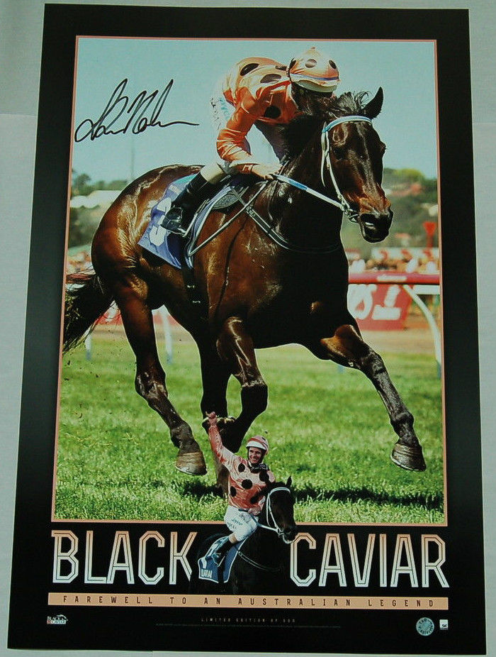 Black Caviar Vertaramic signed by Luke Nolen, Framed