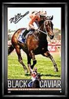 Black Caviar Retirement Feature Photo Signed by Luke Nolen, Framed